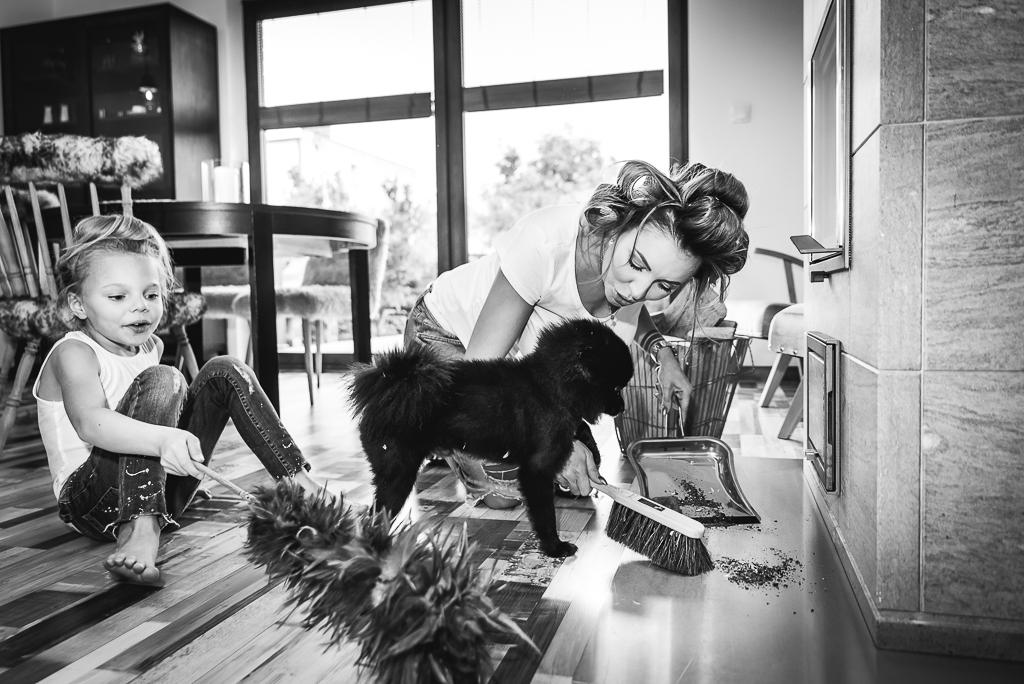 pies pomeranian czarny sesja zdjęciowa