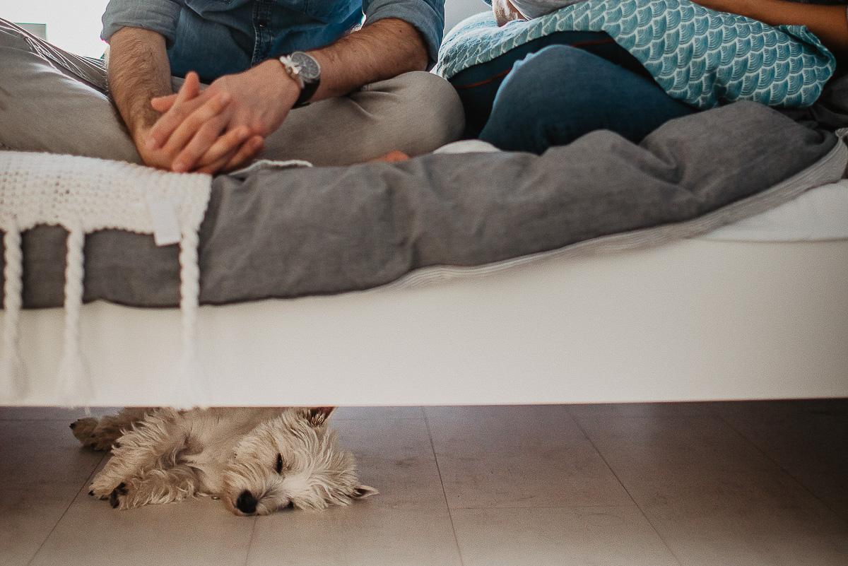 noworodek i pies jak się dogadują