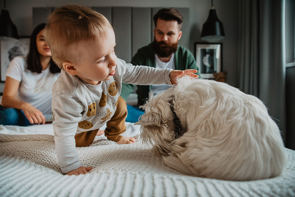 zabawa roczniaka z psem