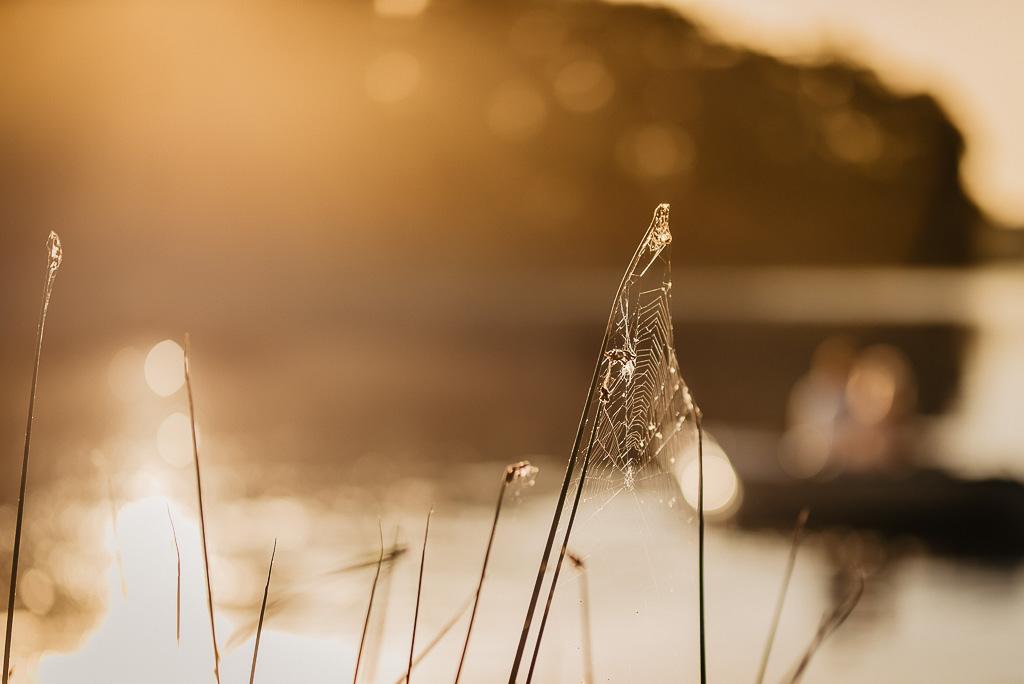 pajęczyna wschód słońca nad jeziorem